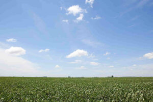 campo argentino del sector agroindustrial