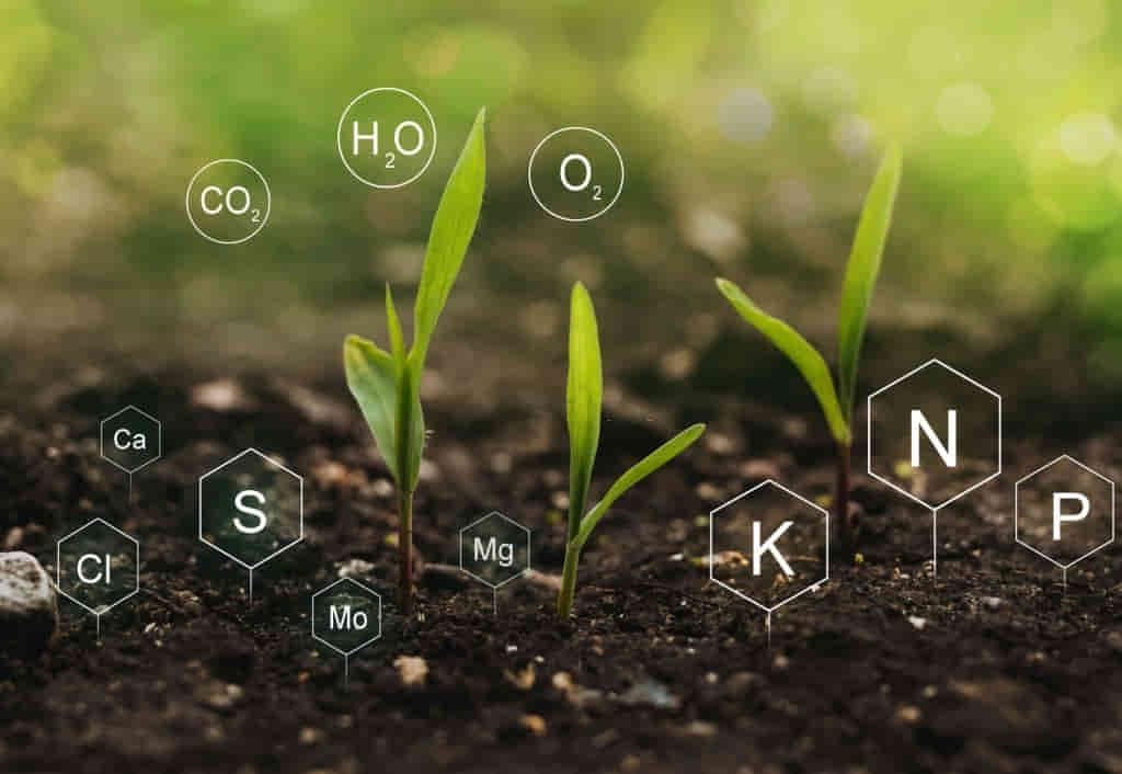 suelo de campo argentino con fertilizante nutrido en zinc