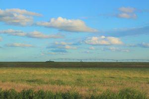 campo sembrado de argentina