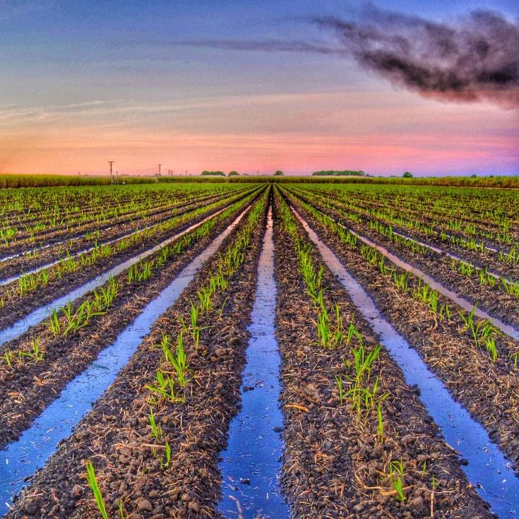 campo riego de plantación