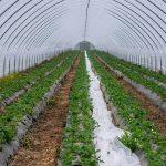 túnel blanco con plantas siendo regadas y mantenidas por profesionales