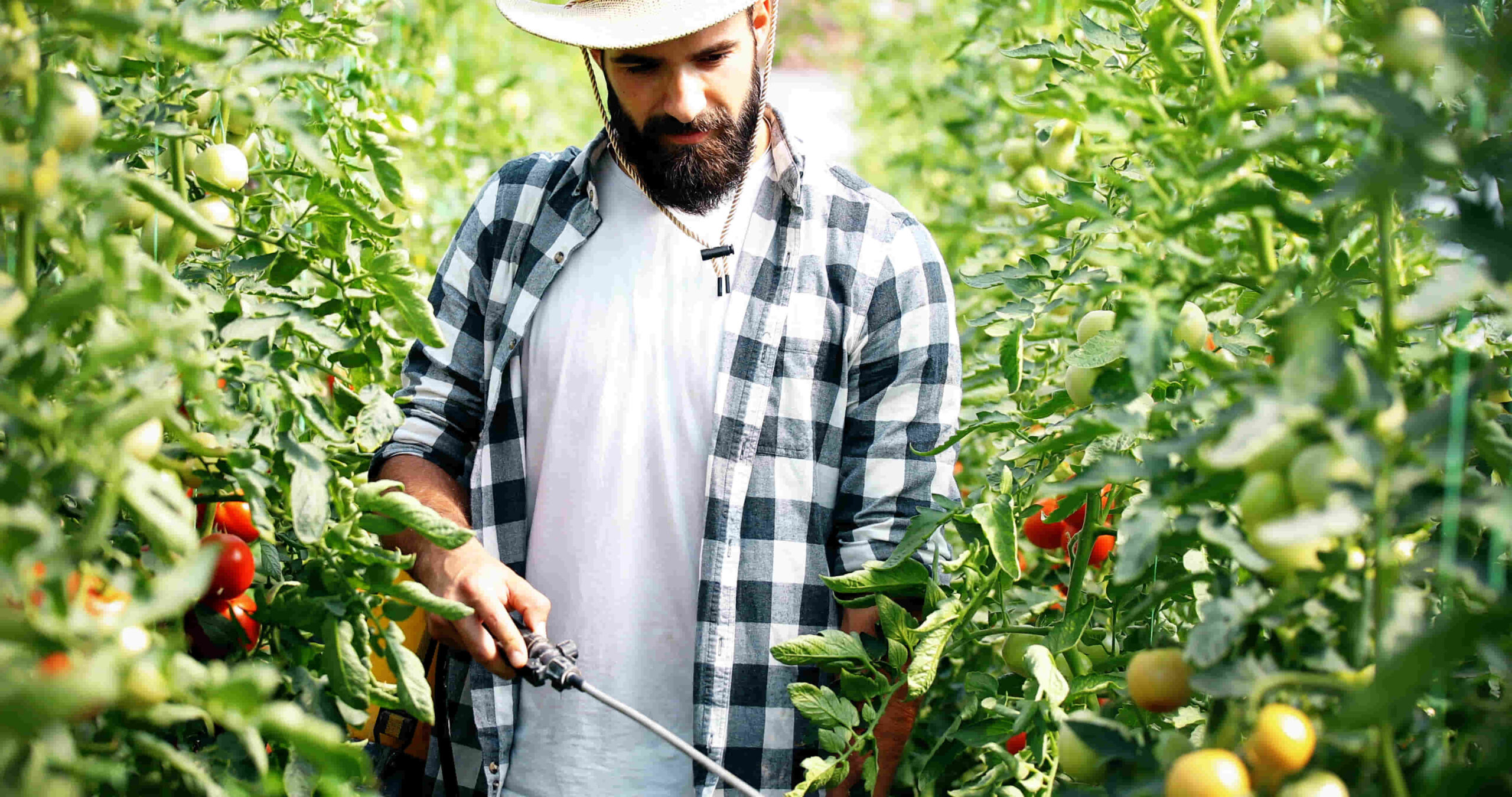rociador y fumigador para cultivos