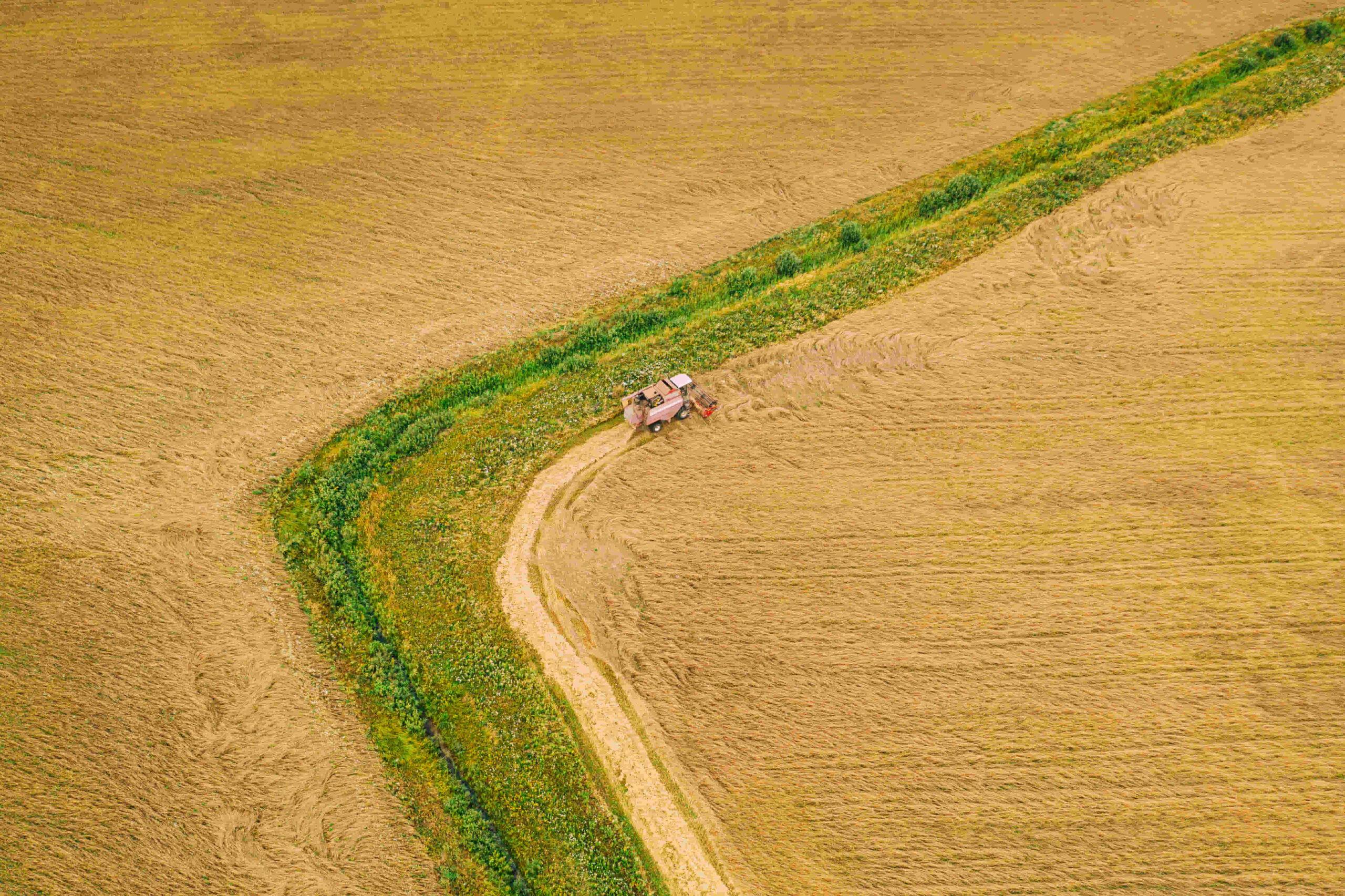 productor agrícola de argentina sembrando y cosechando teff en el campo de la pampa por primera vez